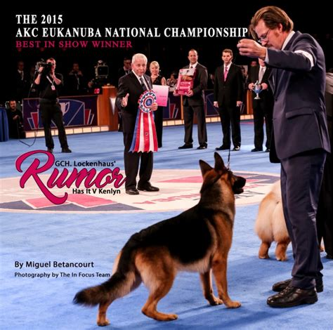 akc show rumor the 2015 akc eukanuba national chionship best in show winner miguel
