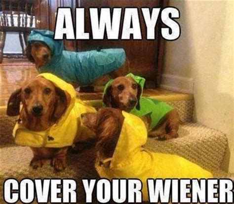 Weiner Dog Meme - 20 puns that are so bad they re good pleated jeans