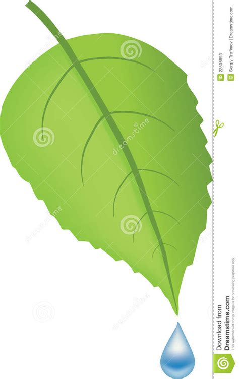 Kemeja Green Blue Leaf green leaf and blue water drop stock photos image 22506893