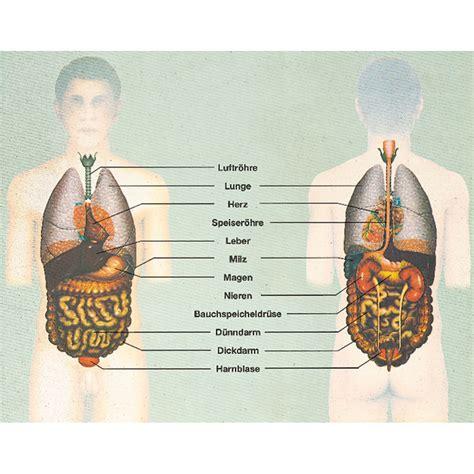 innere organe des menschen schaubild der mensch innere organe gesundheit und krankheit w 2873