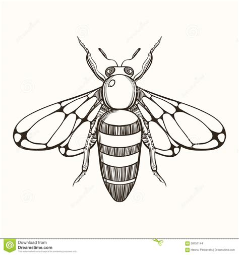 hand drawn engraving sketch of bee vector illustration