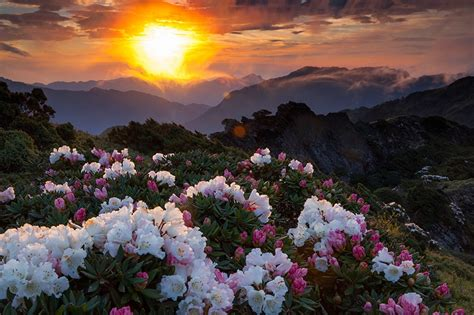 Flower Mountain images nature mountains flowers scenery sunrises and sunsets
