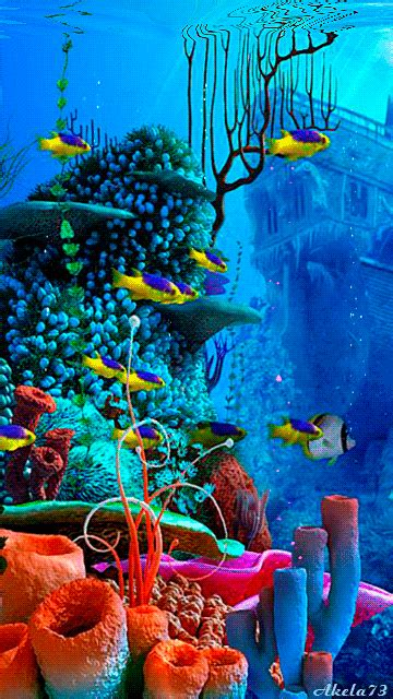 Fish Live Wallpaper Mobile9 by Mobile9 Forum Gt And Water Collection Of Screensavers