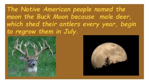 Do Deer Shed Their Antlers Every Year by Names Of Special Moons