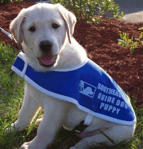 southeastern guide dogs non profit spotlight the southeastern guide dogs st petersburg fl homes for sale