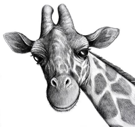 Animal Pencil cool drawings image animals animal drawings in pencil