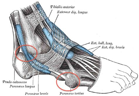 running shoes for peroneal tendonitis the 6 most common reasons for ankle while running