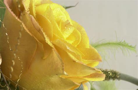 fiori interflora fiorista piera savona bouquet addobbi fiori piante interflora