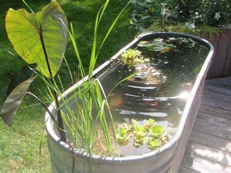 backyard fishing pond 15 awesome small backyard aquarium diy ideas