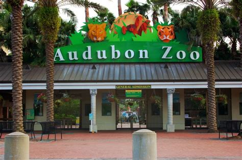 www zoo section com audubon zoo new orleans easy travel guide