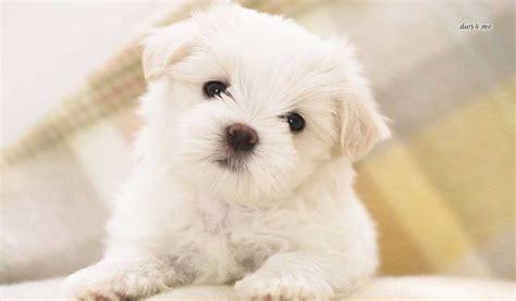 imagenes de perritos image gallery imagenes de perritos