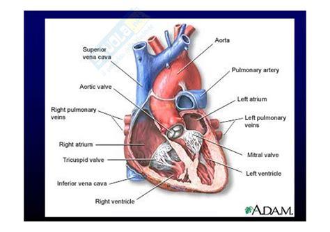medicina interna appunti medicina interna cuore