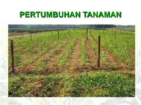 bioetanol adalah agroindustri bioetanol sorgum terpadu