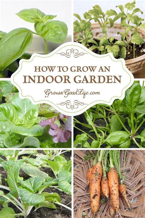 how to grow herbs indoors how to grow an indoor garden gardens the winter and