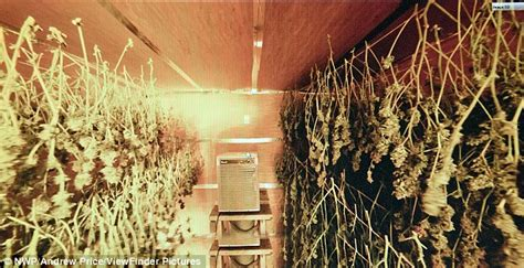 marijuana drying room cannabis factory found inside bangor wales railway tunnels containing cannabis worth