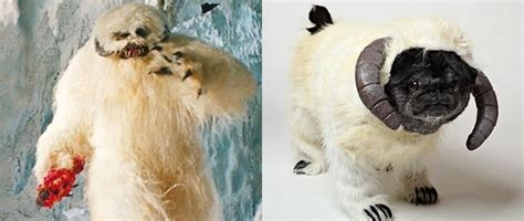 pugs that look like things 10 pugs that look like things pleated