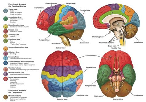 vestibular nerve section recovery stroke physiopedia