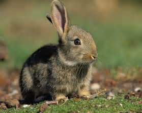 animals pictures domestic animals images bunny hd wallpaper and background