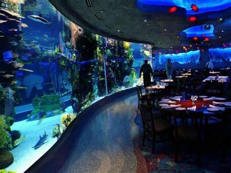 Home Decor Lubbock Tx kristen kindoll aquarium staffers bond with animals