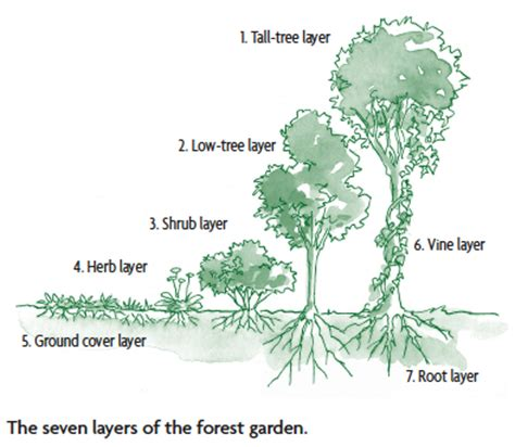 Creating a Food Forest   Step by Step Guide   Permaculture