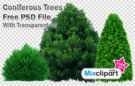 graphics design psd file free download coniferous trees psd file with transparent bg