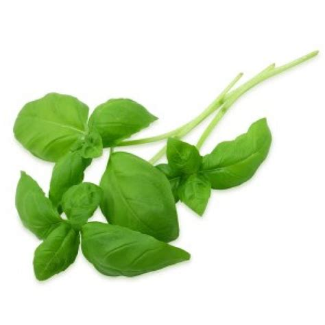 Promo 250 Ml Basil Hydrosol basil lemon at wholesale price basil lemon essential