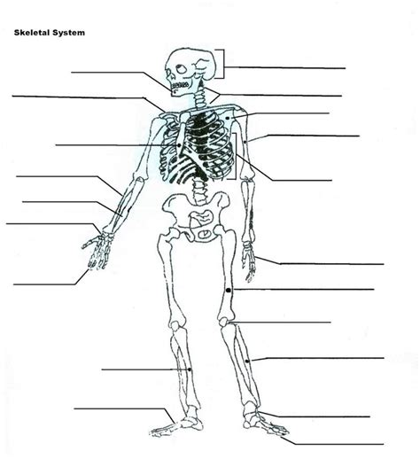diagram of machine diagrams of the skeletal system diagram site