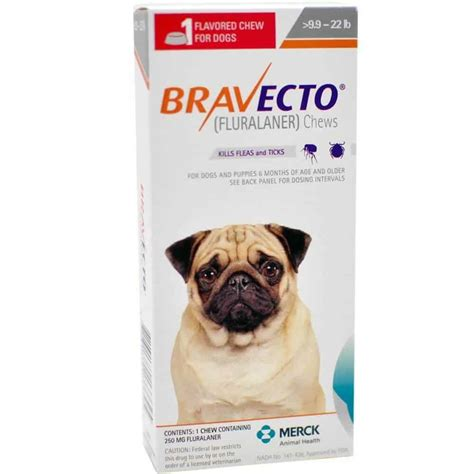 Bravecto Flea Medicine For Cats - pet flea treatment flea medicine for cats and dogs pet