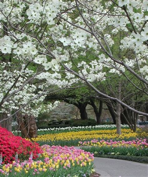 Dallas Arboretum And Botanical Garden Dallas Tx Dallas Blooms Picture Of Dallas Arboretum Botanical Gardens Dallas Tripadvisor