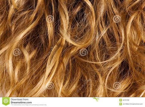 curly dirty blonde hair blonde curly hair background royalty free stock images