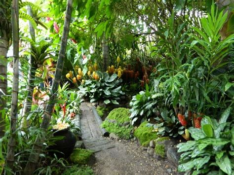 tropical plants for backyard best 25 balinese garden ideas on