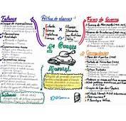 Blog Vall&233ria Carvalho Mapas Mentais De Hist&243ria Geral