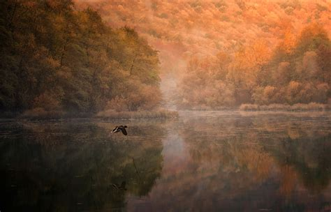 landscape nature mountain forest lake birds flying