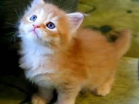Fondos de Gato | Fondos de pantalla de Gato - Animales | Fondos de ... Gato
