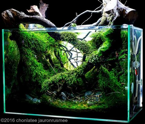 aquascaping fish 616 best images about aquascaping on pinterest fish tanks tropical fish and