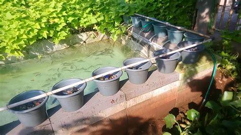 Jual Kolam Terpal Gurame budidaya ikan gurame di kolam terpal doovi