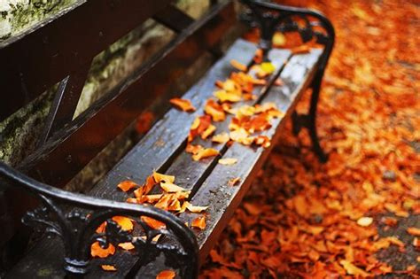 fall bench autumn the year s last loveliest smile