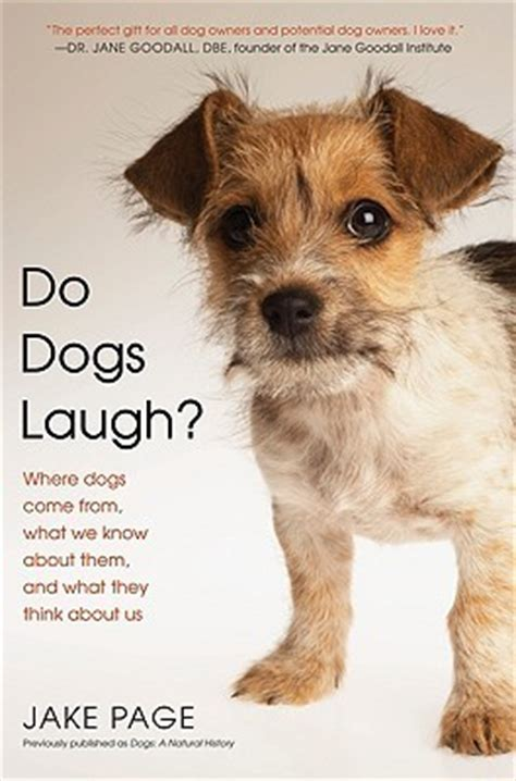 what do dogs think do dogs laugh where dogs come from what we about them and what they think