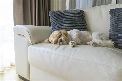 protect couch from dog how to protect furniture from dog hair and nails