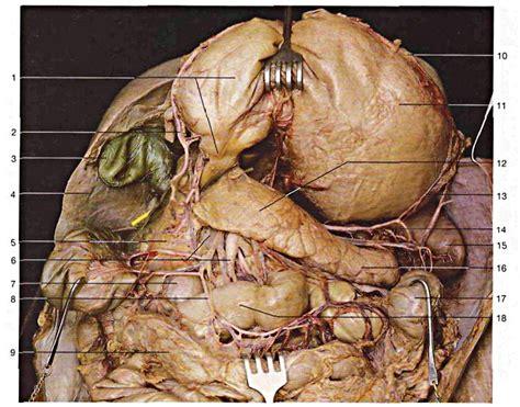 diverticolite alimentazione corretta diverticolite sintomi diagnosi e trattamento