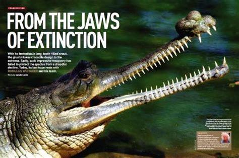 Saving the gharial crocodile | Discover Wildlife