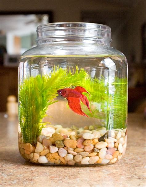 1000 ideas about small fish tanks on fish