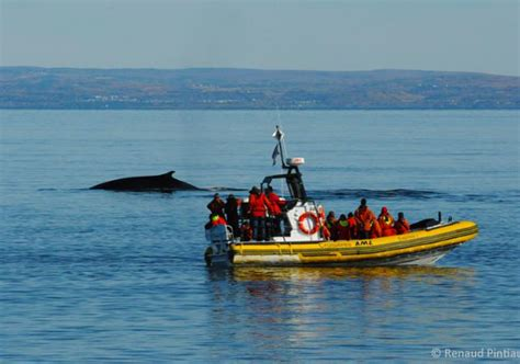 zodiac boat quebec inflatable boat adventures whale watching zodiac