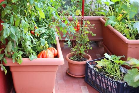balcony garden containers growing vegetables in pots starting a container