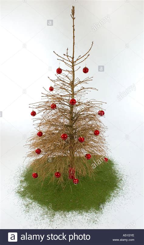 old christmas tree with no needles on it stock photo