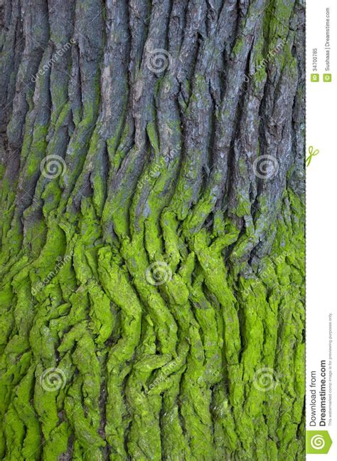 what is a tree trunk covered with 4 letters tree bark royalty free stock photo image 34700785