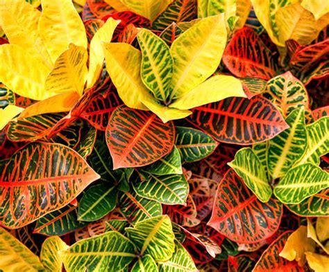 piante interno poca luce piante da interno con poca luce pianta interno domande e