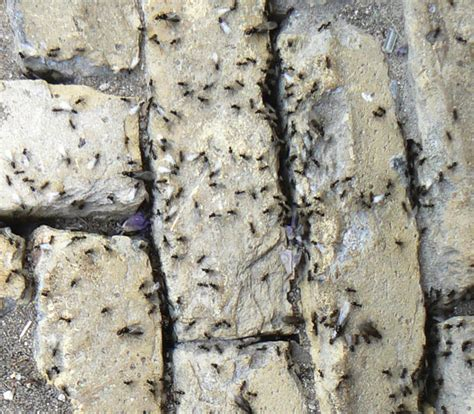 tuin een grote mieren nest mierennest de wegmier