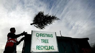 treecycling christmas tree recycling bob vila