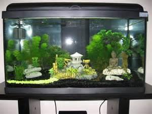 aquarium avec d 233 coration asiatique d 233 coration zen